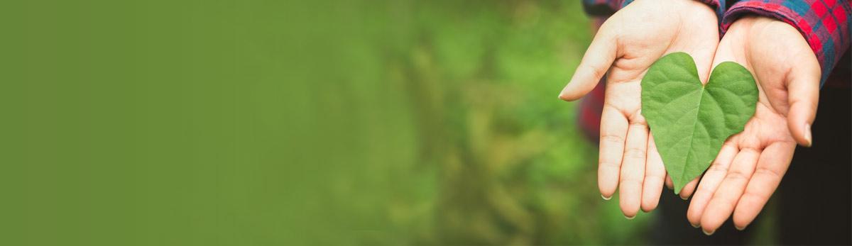 المؤسسة الخضراء - الكلمة الخضراء احمد الانصاري
