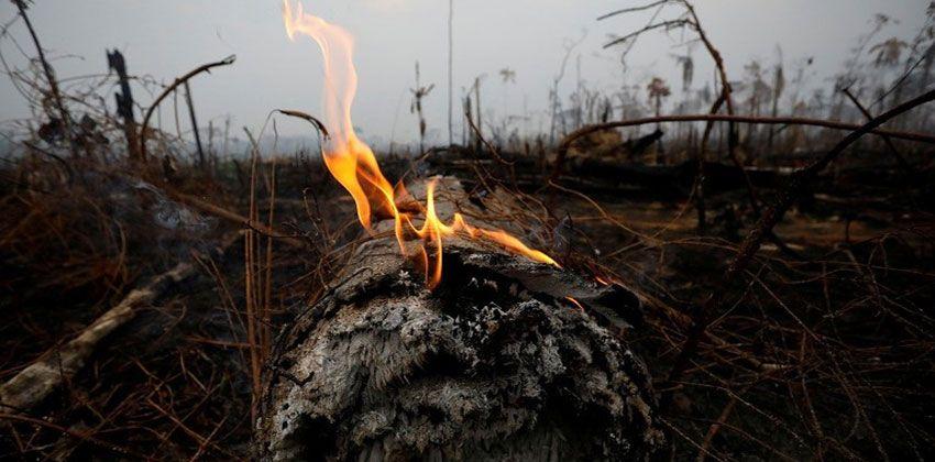 حرائق الأمازون