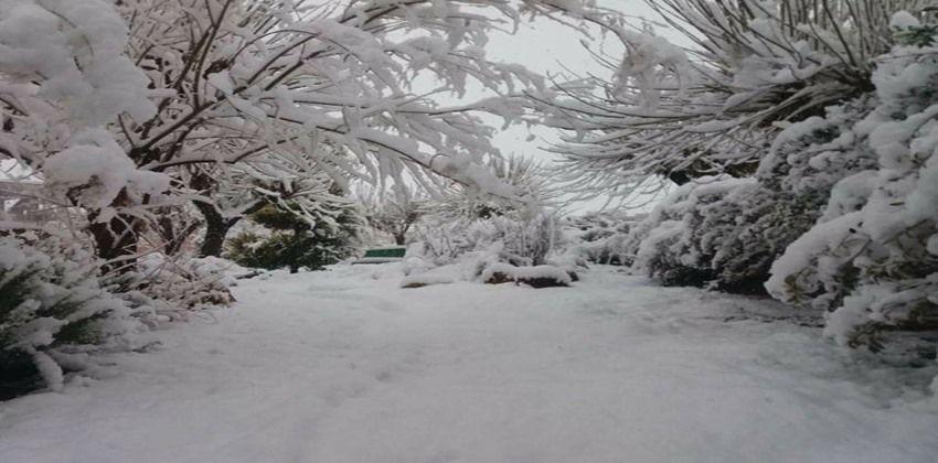 الثلوج في قارة بريف دمشق