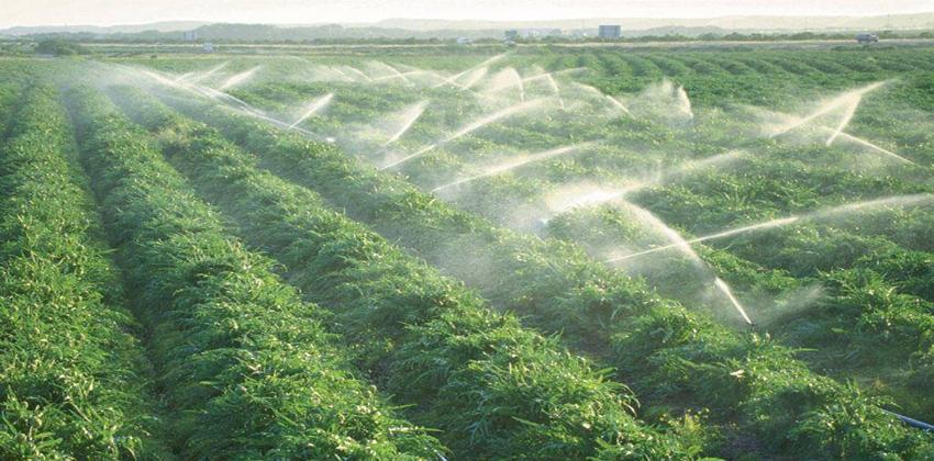 الزراعة الكثيفة