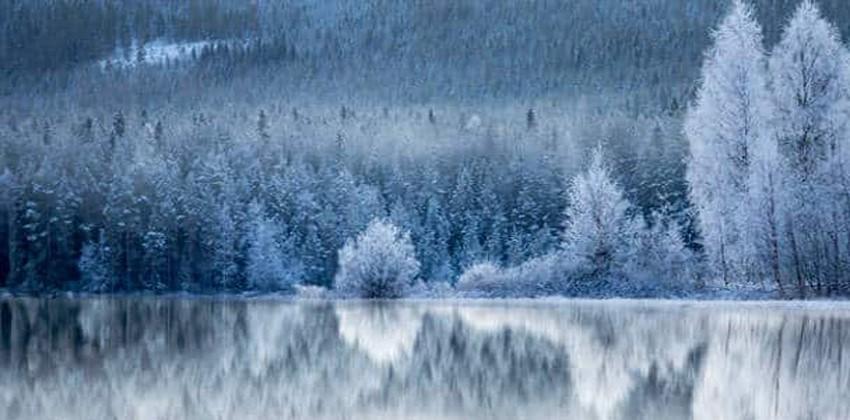 غابات المناطق الباردة