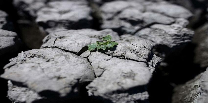 كربون التربة