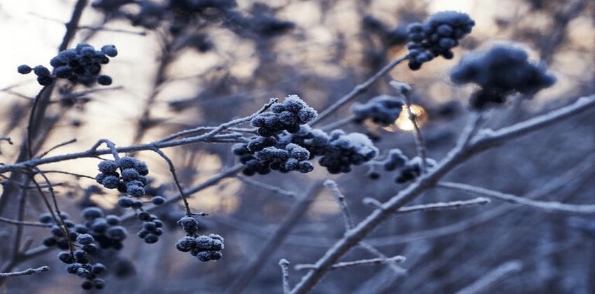 عصير النبتات