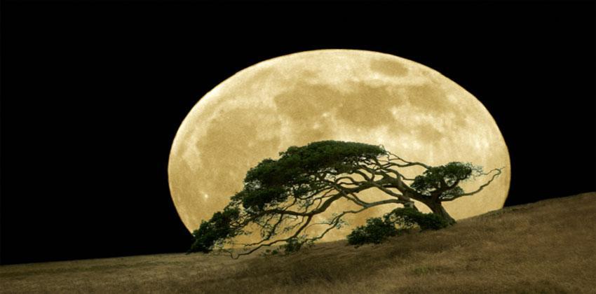 أشجار القمر