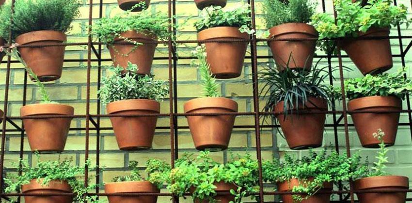 زراعة الخضروات الورقية