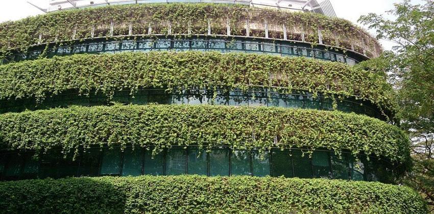 النباتات الخضراء